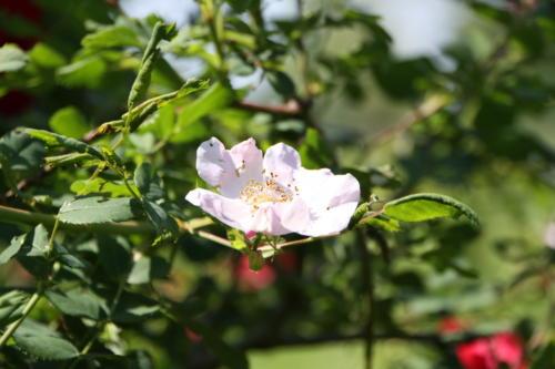 Pflanzen & Blumen